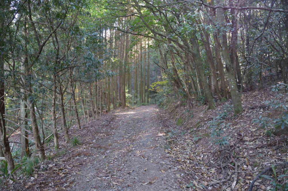 高野山公園の裏山