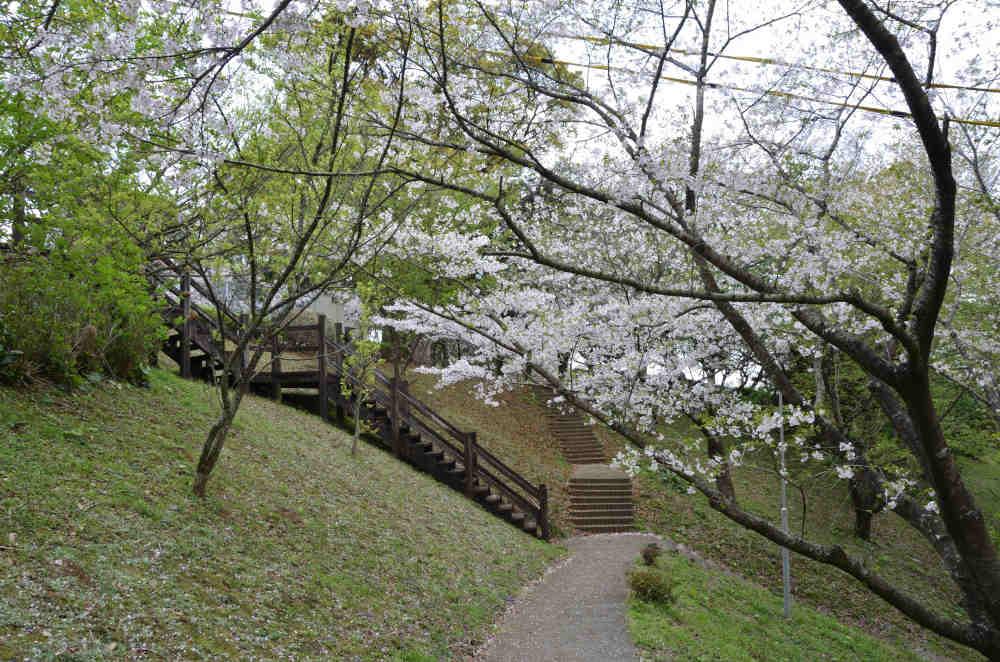 東光山の遊歩道